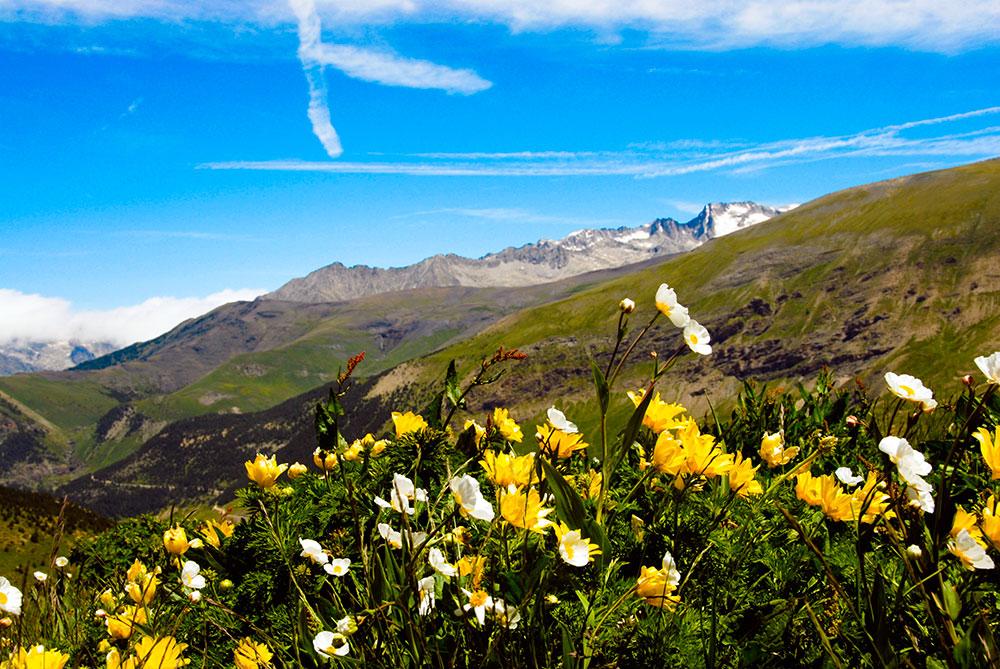 Fauna y Flora Valle de Tena y del Aragón | Estación de Esquí de  Formigal-Panticosa