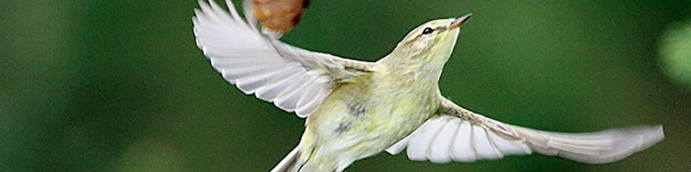 ornitologia-valle-benasque